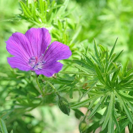 ylistön kukkia.jpg