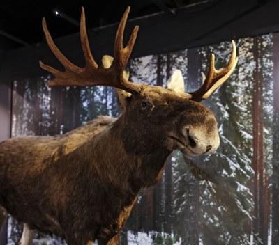EI KAYTOSSA Luontomuseon näyttelyt - exhibitions